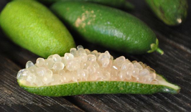 Limone caviale, consigli per la coltivazione in casa ...